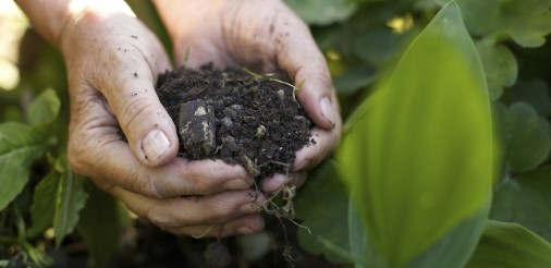 Old woman with handful of soil in garden